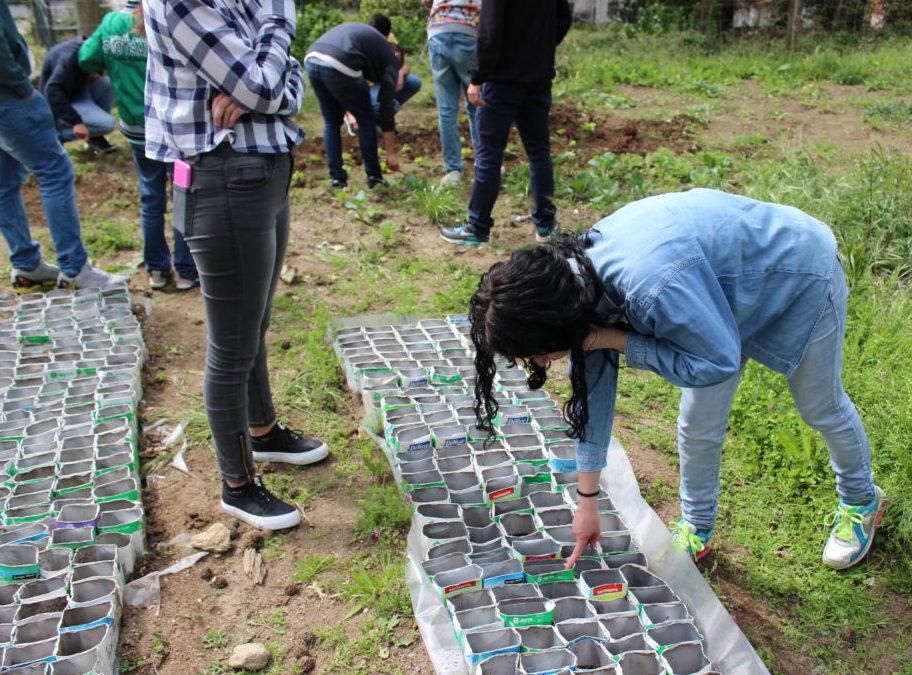INA desenvolve viveiro de plantas nativas