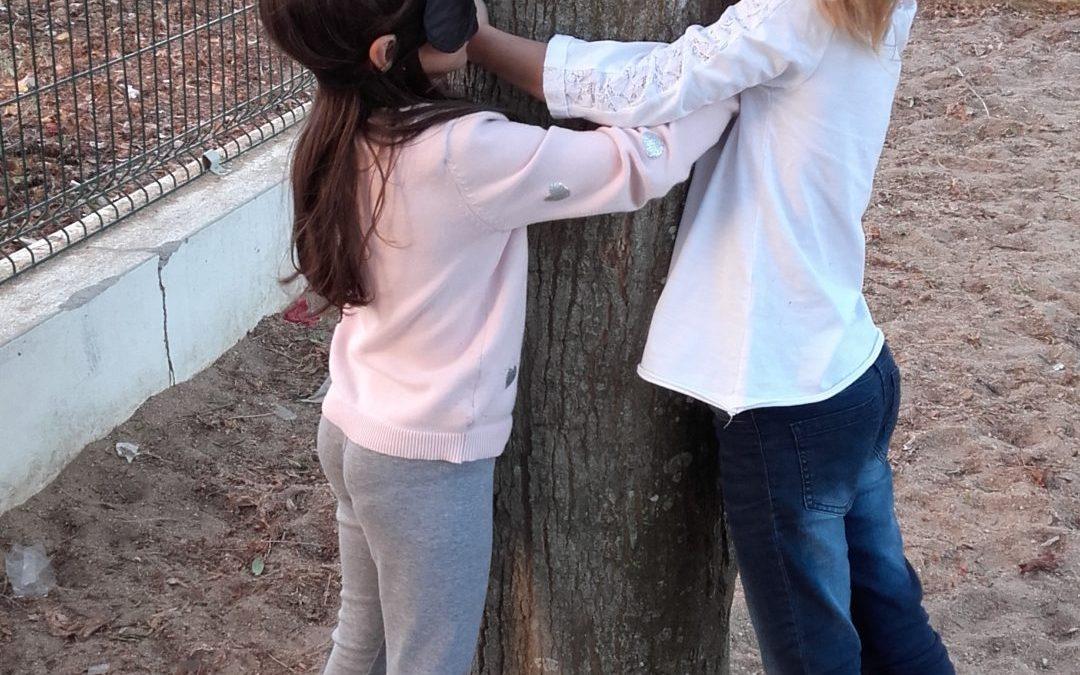 Vamos conhecer as nossas Árvores