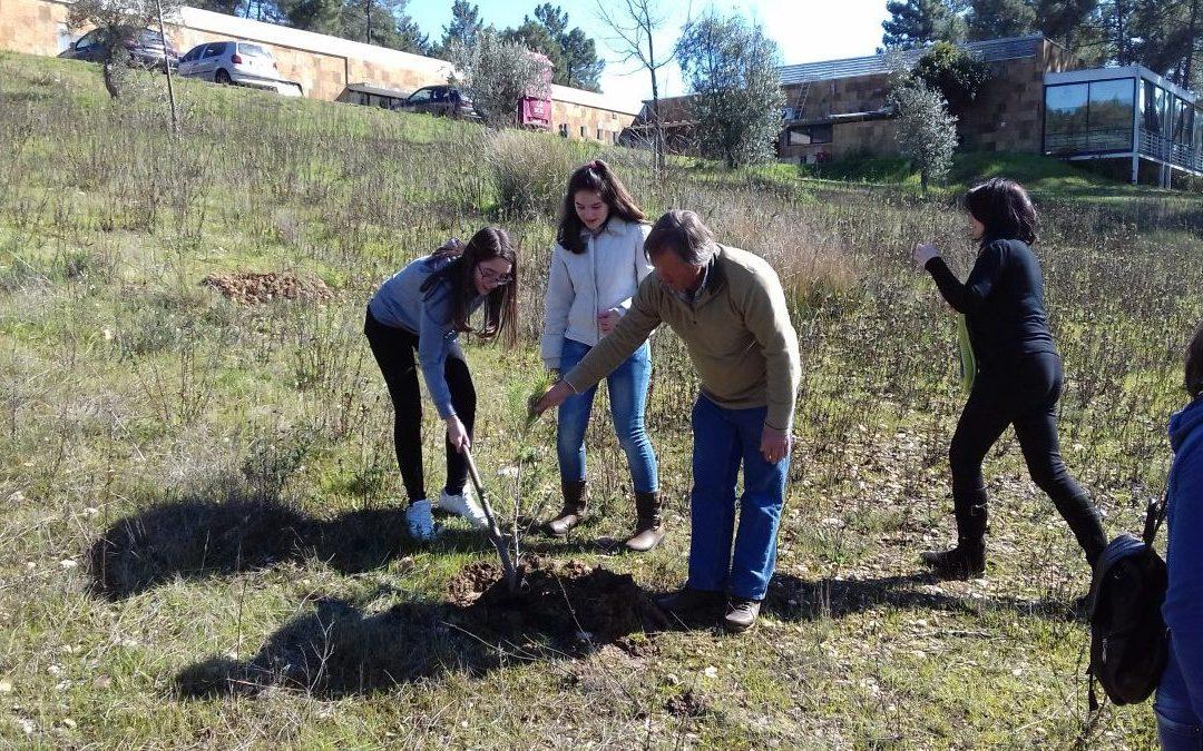 Abrantes | alunos das Eco-Escolas e utentes do cria plantam árvores no parque urbano de São Lourenço