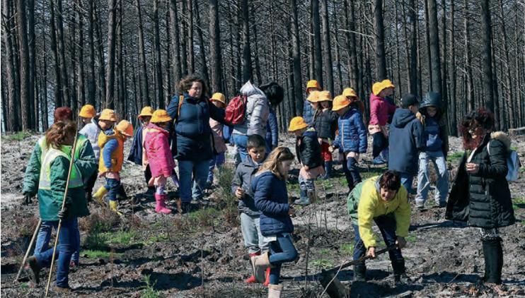 Crianças dos Capuchos 'apadrinharam' pinheiros no Dia das Florestas