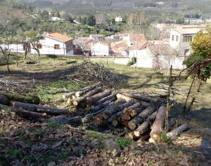Góis assinalou Dia Internacional da Floresta