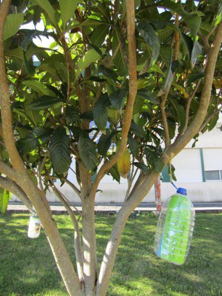Frases elaboradas pelos alunos colocadas nas árvores.